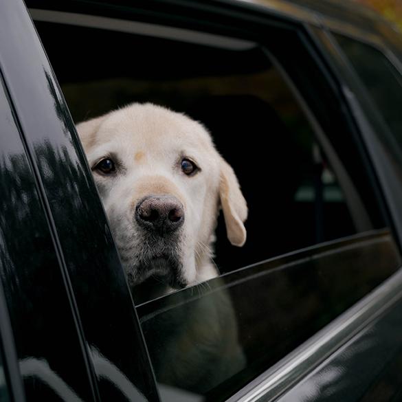 4 consejos para perros que tienen miedo a los coches