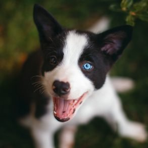 A qué edad los perros empiezan a ladrar