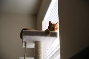 a los gatos les gusta dormir en lugares altos motivos