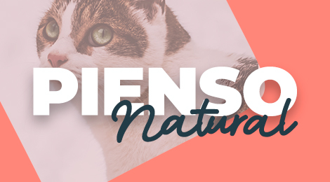Pienso natural para gatos