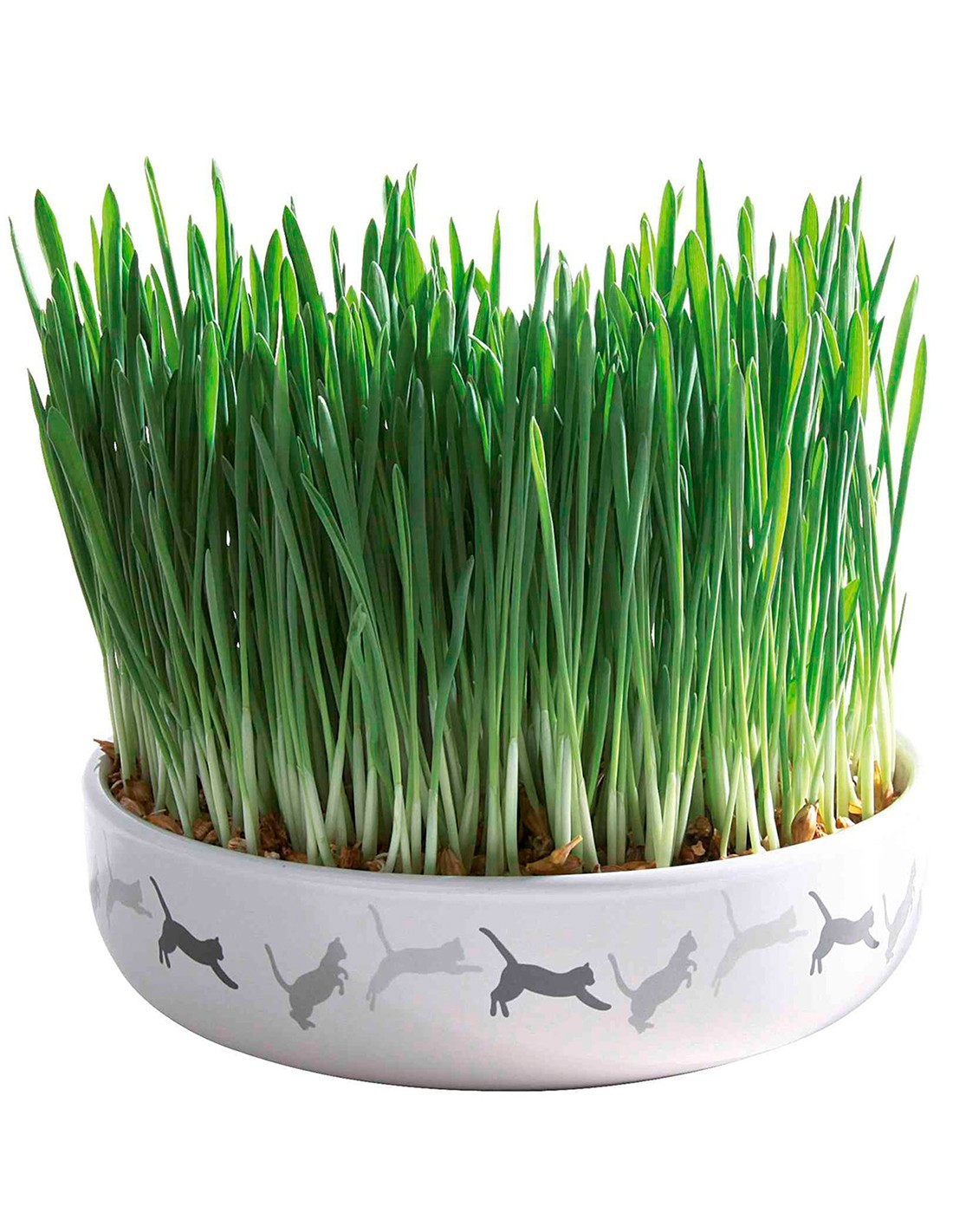 Comedero de cerámica gatos con hierba gatera